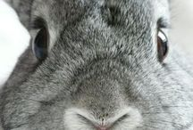 Here Comes Peter Cottontail! / It's about the rabbit