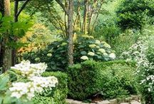 Secret Garden / A flower fairy's delight. The sensual beauty of the Earth right in your own backyard