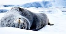 My Travels - Antarctica / A collection of pins from our travels in 2016. Click on the pin to view the post from which they came.