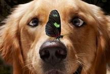 Doggies / by Karen Healey