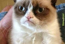 Oh Grumpy Cat / I <3 this cat!  / by Nicole