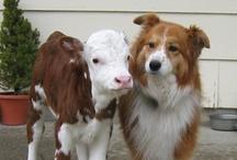 Cows 'n Dogs / by Lulu Garrett