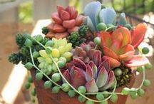 Succulents / Succulent plants / by Sisney Large