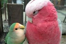 Pretty birdies
