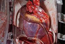 CZŁOWIEK Serce