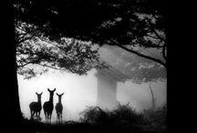 Somedays Sanctuary / inspirations for my dream home!!!!! / by Monika Skye