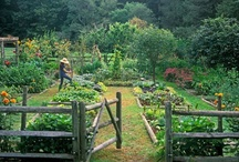 Home - Garden / by Edie DeLappe