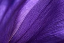 Color: Violet / #violet #purple #plum #lavender #lilac #mauve #grape #amethyst