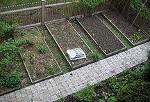 Gardens & Backyard