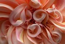 peachy keen / by Katie Woolsey