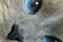 Fuzzy Animals / by Elizabeth Fleming