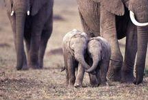 Animals! / by Desiree Dixon