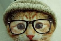 Koot Kittehs / Images of the feline purrsuasion that amuse me...