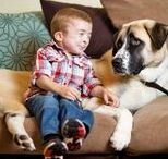 Amazing dogs / Amazing and inspirational dogs and dog stories.