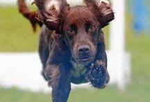 Dog Events UK