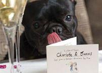 Dog Charities