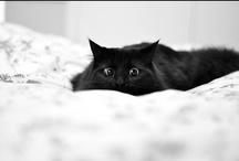 Kitty / by Krystel Doucet