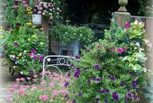 Ode to the Gardener / Photos from our beautiful yard --  / by Vicki Boster