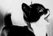 Kitties / by Skye Estroff