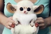 Awww Cute