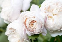 PRETTY PETALS / A collection of peonies, roses, ranunculus, and many more stunning florals.
