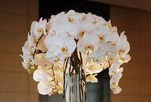 The Orchid Fairy / by Zaahida Bassa-Motala