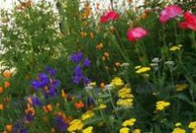 Beautiful garden / Anything That Grows (I Hope) / by Diane's
