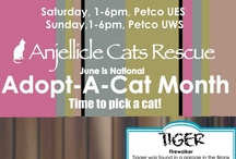 Adoptable cats / by Anjellicle Cats