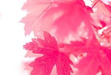 colors # PINK