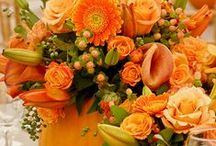 I love fall / Fall recipes, decor, ideas, & pretty pictures. All the things I love about autumn!