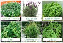 Garden - Plants - & Patio / Gardening and Outdoor Living / by Darling Nikki