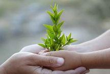 Environment . Green Living . Animals / by Darling Nikki