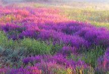 Beautiful Scenery / by Jackie Primrose