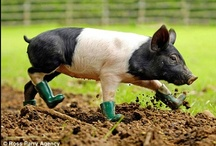 animals wearing shoes and other things
