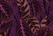 tropicalista / by Nicholas Nelson