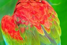 Paint color / by Julie Driggers