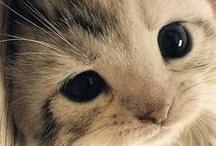 cute little kitty-wittys