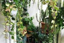 g r e e n / gardens & plants & patios.