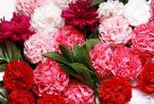 Florals / Floral arrangements, bouquets, wild flowers.