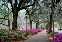 A View of Sultry Savannah GA / Take a visual stroll through Savannah, a magnificent Southern city, that's rich in history and scenic beauty. It's a great place for shopping, dining, theatre, and much more --- all with grace and hospitality.  / by Debra Brown