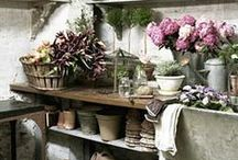 The humble Garden ....potting ...Shed / by Jim Stagno