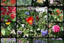 Gardening / Gardening ideas, tips,design and decorations.