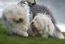 Sheepdog Love / by Annette Dahl