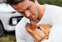Celeb Pet Lovers / Our favorite celebrities are pet lovers too! Check out the Hollywood-worthy adorableness.