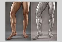 Anatomy for Sculptors - Leg