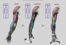 Anatomy for Sculptors - Arms
