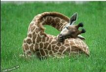 Art File / Giraffes & Zebras / Dalmations...more? Elephants & Camels / by Diane K. Ryan
