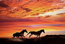 HORSES / The horse. . .truest friend a cowboy and cowgirl ever had. Some of these horses are ours, some we wish were ours . .all are loved, respected and admired. And some are just there to give you a giggle!