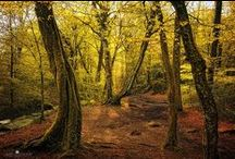 Beautiful Forest / by Regina DeGrenier