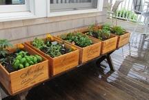 Gardening: Why Not?